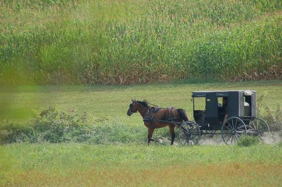 Amish Country: Buggy ride at Yoder's Farm
