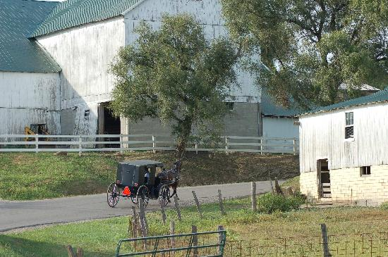 Ohio : Amish Buggy on cuntry road