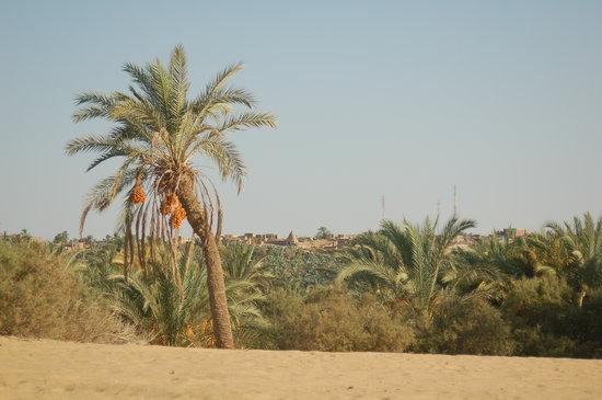 Old Bawiti