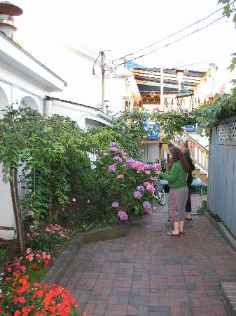 Provincetown, MA: Alley of flowers