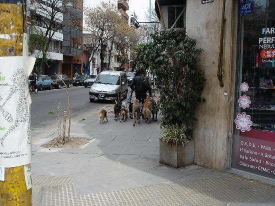 Palermo Viejo: Dog walkers