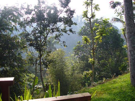 Komaneka at Tanggayuda: Vue de notre villa vers la droite