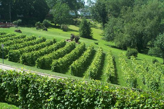 A Secret Vine Bed & Breakfast: Nearby vineyards