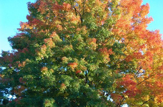 Berkshires, MA: Foliage