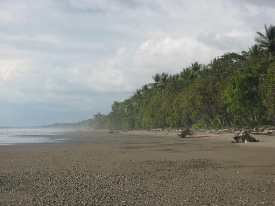 Mar y Selva Ecolodge : plage déserte !