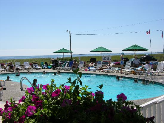 Sea View Motel: Pool