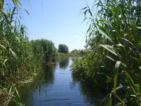 day trip by boat - water channel - Picture of Danube Delta, Tulcea ...