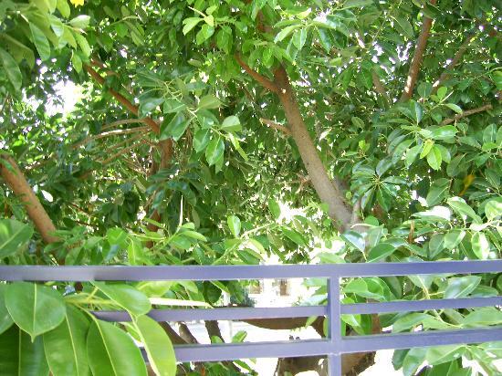 Hotel Kleopatra Blue Hawaii: balcony view
