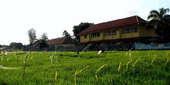 Cilacap, Индонезия: Rice Field