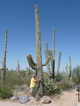 Saguaro National Park, AZ: Saguaro West