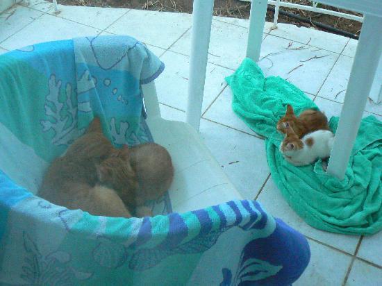 Hotel Pefkos Garden: good morning cats!