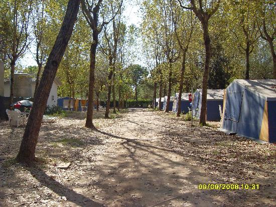 Camping Ca' Savio: Our street 31..when everyone gone home!!