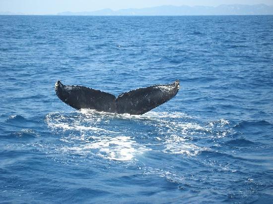 Okinawa Prefecture, Japón: クジラ
