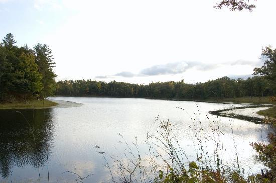 Canoe Bay: Pond IV