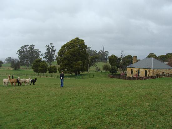 Blackwood Park Cottages Mole Creek: Heritage Cottage from Rear.... Amazing Countryside