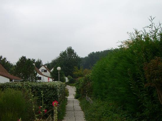 Duinendaele