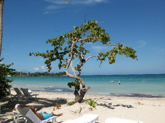 Couples Negril: Couples intertwining tree
