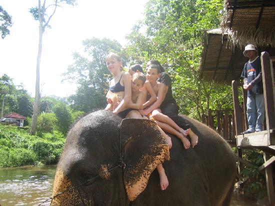 بهنج, ماليزيا: magnifique éléphant!