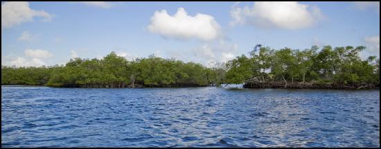 Everglades Area Tours : 10.000 Islands