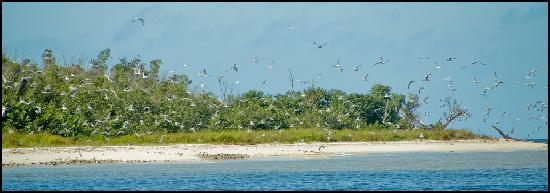 Everglades Area Tours: 10.000 Islands