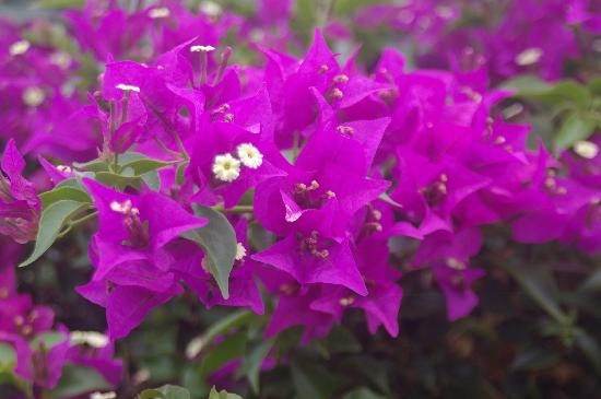 Hale Mahina Beach Resort: flowers flowers are everywhere