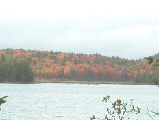 Mew Lake Campground: Fall colours