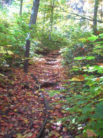 Mew Lake Campground: Leaf-strewn path