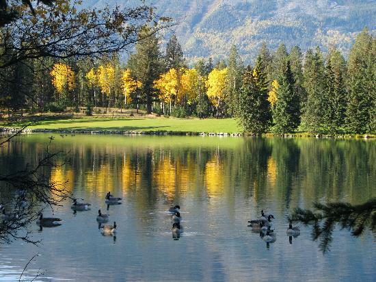 Fairmont Jasper Park Lodge: Geese