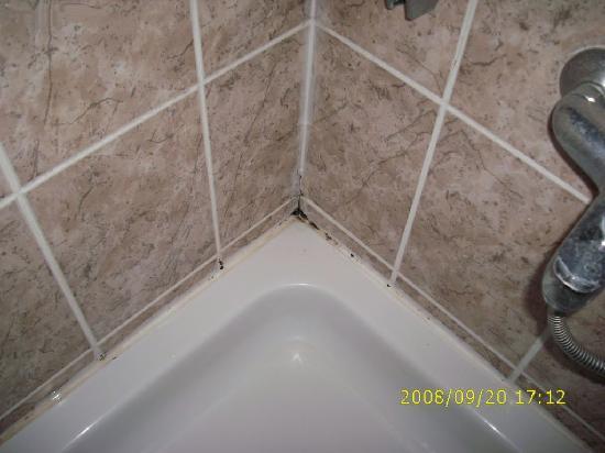 Forest Park Hotel: Schwarzschimmel in der Dusche