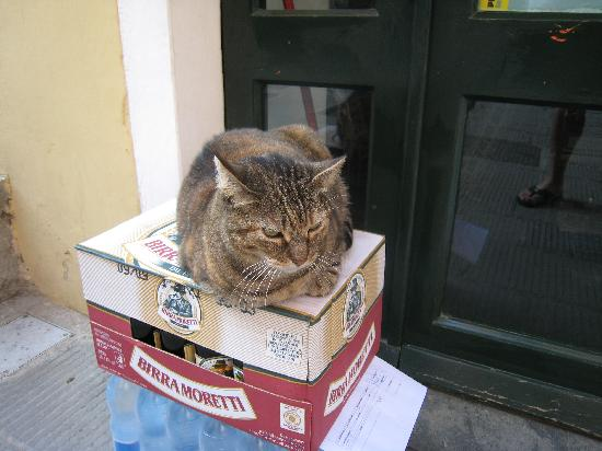 La Mala: One of the many cats of Vernazza