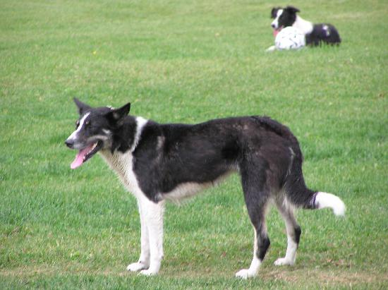Echo Valley Ranch & Spa : Eleven working dogs
