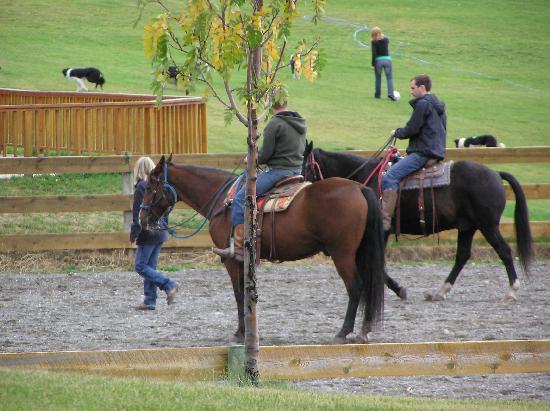 Echo Valley Ranch & Spa : 32 horses