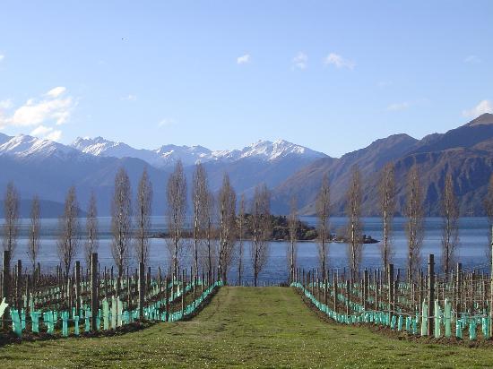 Benbrae - Cardrona Valley Resort: The local vinyard