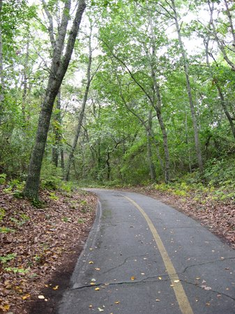 Beech Forest: Bike trail