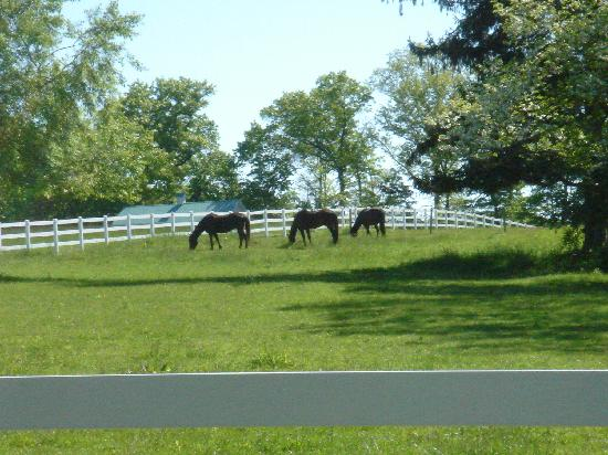 Sun and Cricket Bed and Breakfast: Horses on property