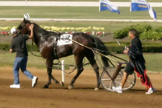 The Red Mile : 2008 Tattersalls Pace - Somebeachsomewhere