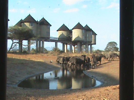 Wildlife Kenya Safaris - Day Trips: Ex Hilton Lodge, fab location!