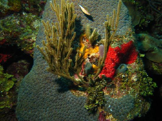 Anthony's Key Resort: Beautiful Coral