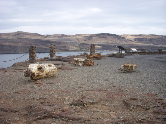 "Vantage, WA: Petrified wood at visitor center. FYI - Visitor center is not close to ""Gingko Petrified Forest"""