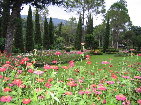 Krisdadoi Chiang Mai: More garden views