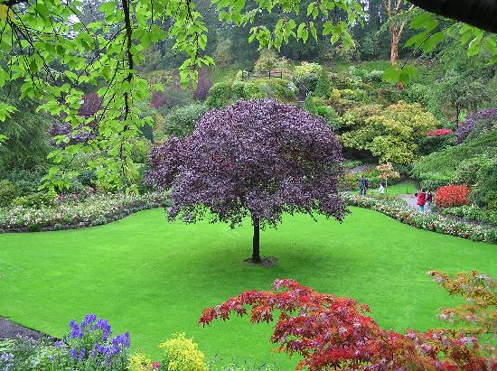 The Butchart Gardens: in the Quarry Garden