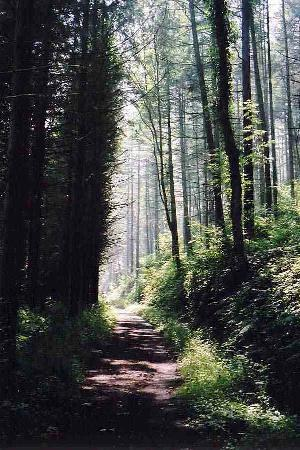 Stepaside, UK: Woodland Walk or Cycle to the beach