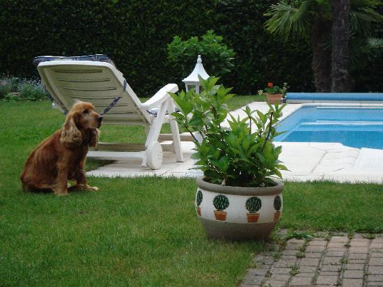 Casa Serena: Nico il cane