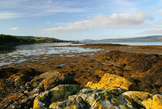 Ilha de Mull, UK: Local beach at low tide