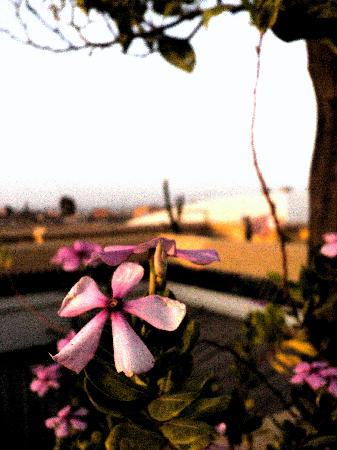 Dar Lalla F'dila : Fleur