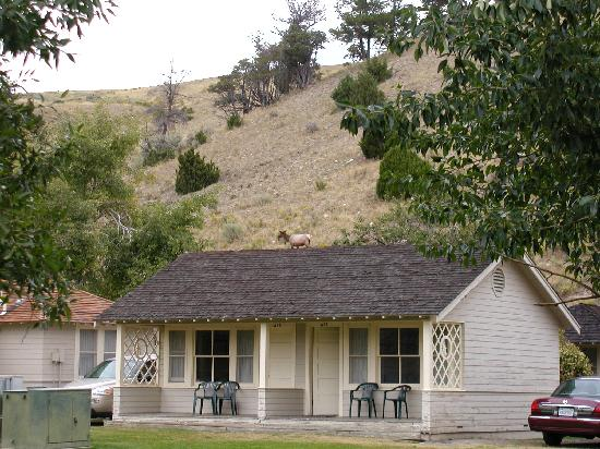 Mammoth cabins picture of mammoth hot springs hotel for Cabins in wyoming near yellowstone
