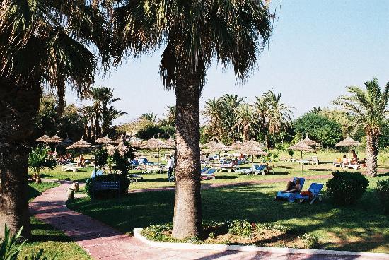 SunConnect One Resort Monastir: Grassy sunbathing area next to the pool