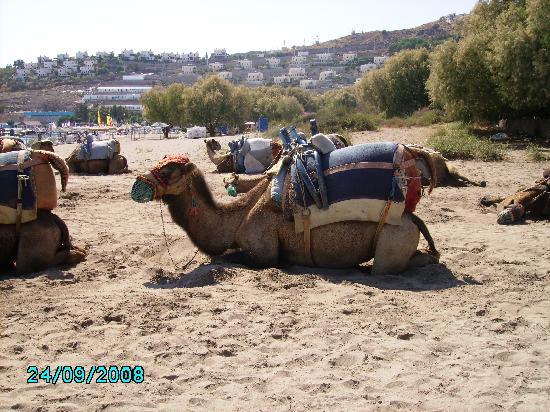 Medisun Hotel Camel Beach