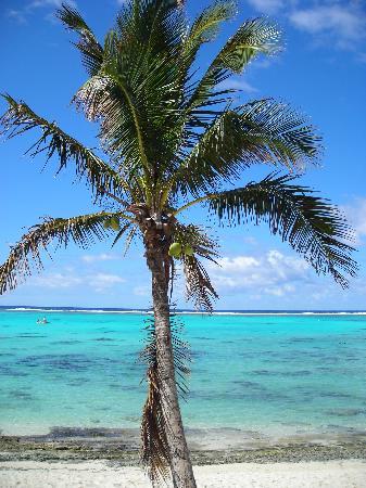 Muri Beach Resort: Fruits of Rarotonga