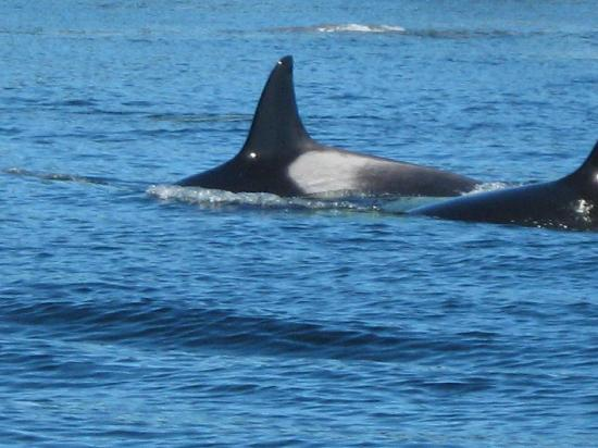 Orcas Island Whale Watching Reviews